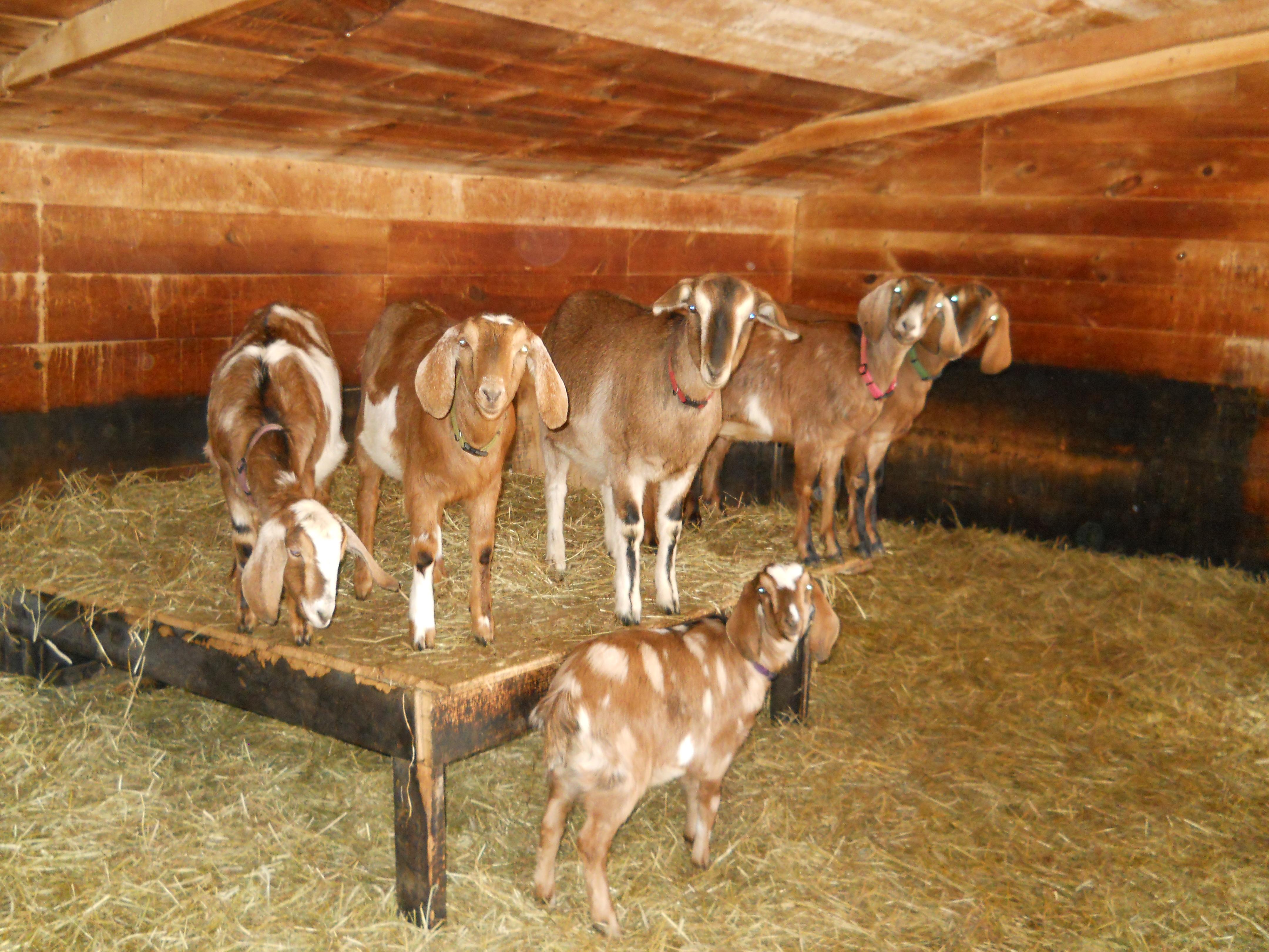 Butternut Farm & Holland Farm
